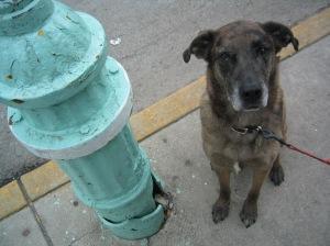 Syd the Wonderdog